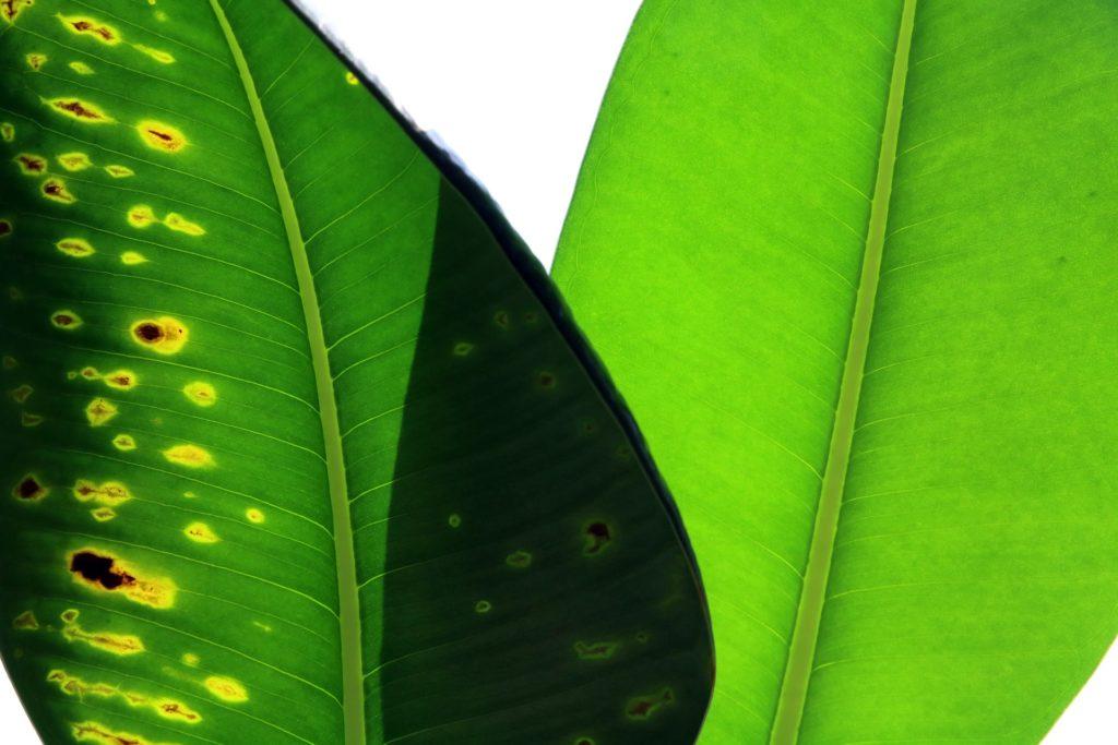 Green Problem